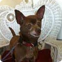 Adopt A Pet :: Dora - Goleta, CA