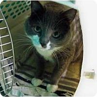Adopt A Pet :: Smokey - Secaucus, NJ