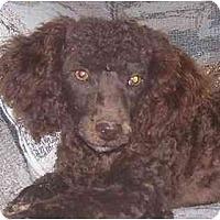 Adopt A Pet :: Bentley - Evansville, IN