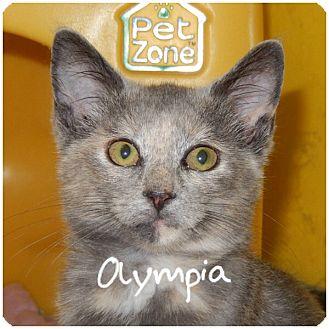 Domestic Shorthair Kitten for adoption in Warren, Ohio - Olympia