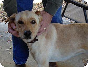 Labrador Retriever Mix Dog for adoption in Winder, Georgia - Brandy
