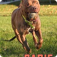 Adopt A Pet :: Sadie - Cary, IL