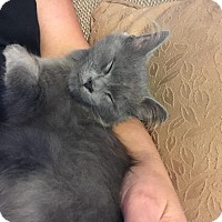 Adopt A Pet :: Smokey - Delmont, PA
