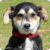 Adopt A Pet :: Cheyenne - Bedford, VA