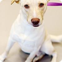 Adopt A Pet :: Jack - Appleton, WI