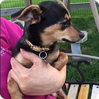 Adopt A Pet :: Bubbles - Beavercreek, OH