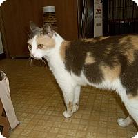 Adopt A Pet :: MOXIE - Medford, WI