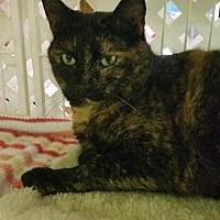 Adopt A Pet :: Smokey - Bloomingdale, NJ