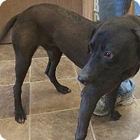 Adopt A Pet :: Calsonic - Shelbyville, TN