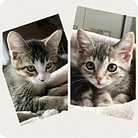 Adopt A Pet :: ALEX & SOFIA - Palatine/Kildeer/Buffalo Grove, IL