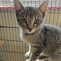 Adopt A Pet :: Martini - East Brunswick, NJ