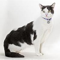 Adopt A Pet :: Maddie - Monterey, CA
