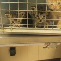 Adopt A Pet :: Manook - St. Martinville, LA