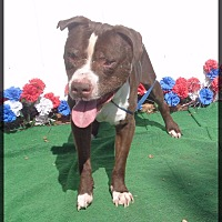 Adopt A Pet :: BUCK - Marietta, GA