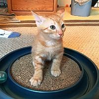 Adopt A Pet :: Andy - Orange, CA