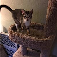 Adopt A Pet :: Leia - El Dorado Hills, CA