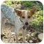 Photo 3 - Blue Heeler/Rat Terrier Mix Dog for adoption in Baton Rouge, Louisiana - Nelson