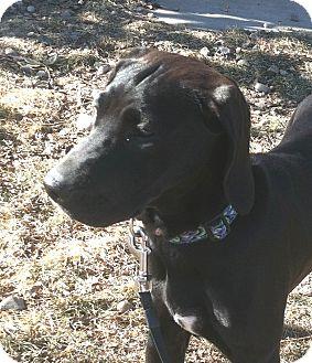 German Shorthaired Pointer Mix Puppy for adoption in Columbus, Nebraska - Lizzy