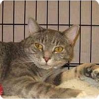 Adopt A Pet :: Grayson - Jenkintown, PA