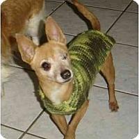 Adopt A Pet :: Nicki - N. Fort Myers, FL