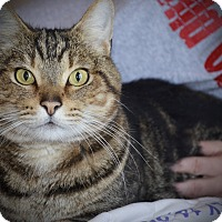Adopt A Pet :: Timmy - Xenia, OH