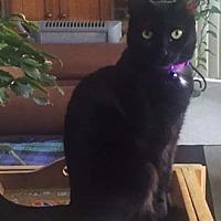 Adopt A Pet :: Sunshine - Merrifield, VA