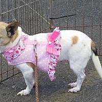 Adopt A Pet :: HANNAH BANANNA - Napa, CA