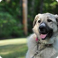 Adopt A Pet :: MIRAGE - Powder Springs, GA
