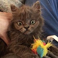 Adopt A Pet :: Lilac - Audubon, NJ