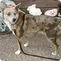 Adopt A Pet :: PEPPER - Medford, WI