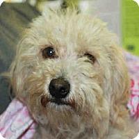 Adopt A Pet :: Rosey - Los Angeles, CA