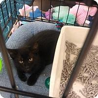 Adopt A Pet :: 8 Ball - San Bernardino, CA
