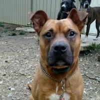 Adopt A Pet :: Henry - Delaware, OH