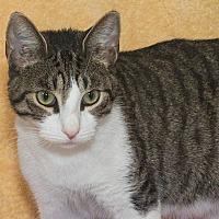 Adopt A Pet :: Charilze - Elmwood Park, NJ