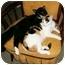 Photo 3 - Calico Cat for adoption in Houston, Texas - Callie
