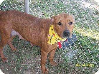 Hound (Unknown Type) Mix Dog for adoption in Hazlehurst, Georgia - Aries