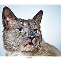 Adopt A Pet :: Blueberry - New York, NY