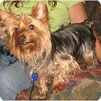 Adopt A Pet :: Bailey - Conroe, TX