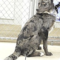 Adopt A Pet :: Brice - Centerpoint, IN