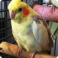 Adopt A Pet :: Julian - Lenexa, KS