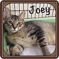Adopt A Pet :: Joey - Bradenton, FL