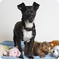 Adopt A Pet :: Dash - Oakland, CA