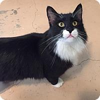 Adopt A Pet :: Prince - Temecula, CA