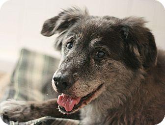 Anatolian Shepherd Mix Dog for adoption in Canoga Park, California - Pepper