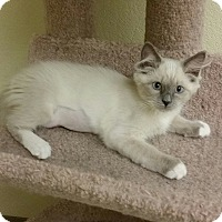 Adopt A Pet :: Jasmine - Phoenix, AZ