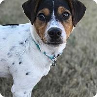Adopt A Pet :: Harper Lee - Marietta, GA