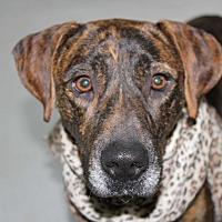 Adopt A Pet :: Alice - Cuero, TX