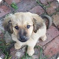 Adopt A Pet :: Santee - Irmo, SC