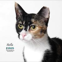Adopt A Pet :: Stella - Belle Chasse, LA