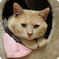 Adopt A Pet :: Andy - Naperville, IL